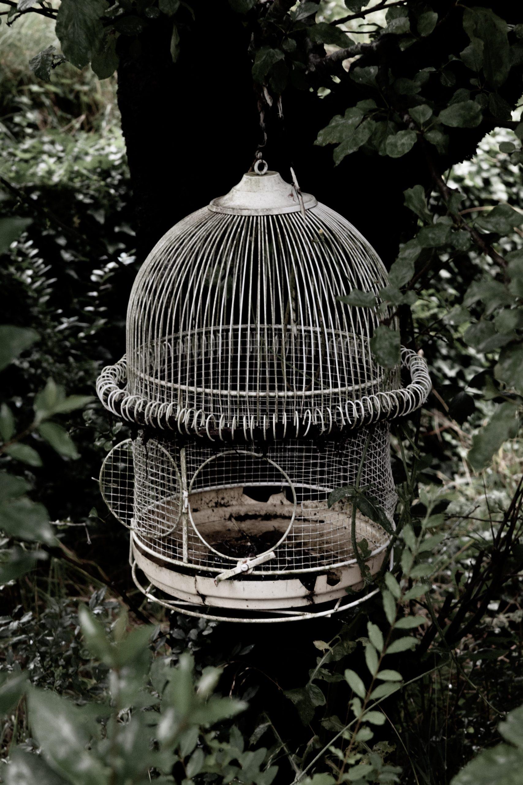 日向坂46屈指の名曲「Cage」についてオタクが解説!概要から歌詞の意味まで
